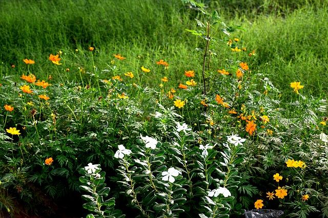 tráva a květiny